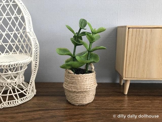 miniature fiddle leaf fig in belly basket planter